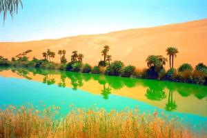 Association des dunes, d'eau et de verdure